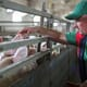 Mental health becomes a growing concern for farming communities in the UK and Ireland thumbnail image