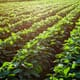 EU holds second consultation on revising pesticide rules thumbnail image