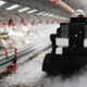 Robots: the new frontier in poultry production thumbnail image