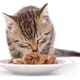 Fads and trends in pet nutrition thumbnail image