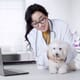 """Opinion: """"It is clear that becoming a vet takes as much commitment and dedication as it ever did"""" thumbnail image"""