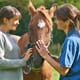 The rise in equine obesity thumbnail image