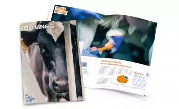 CID Lines - Catalogue