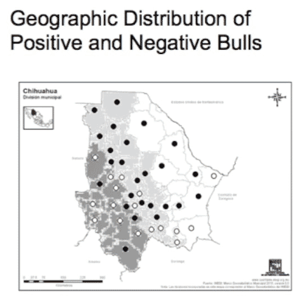 Geographic distribution of positive and negative bulls