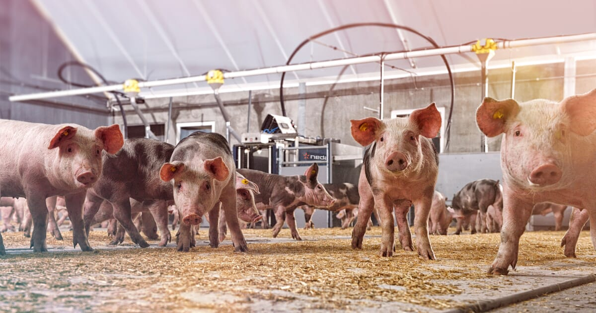 Can you be more precise? New technology to perfect your feed
