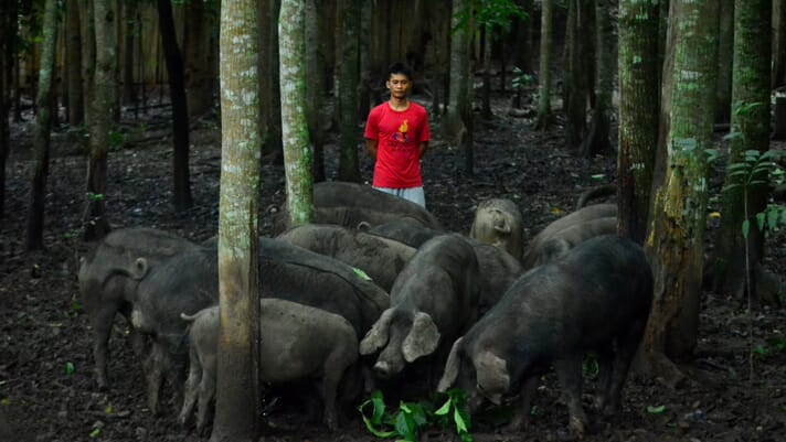 Sitio Anting: where pigs run free in the mountains of Nueva Vizcaya thumbnail image