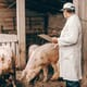 National Pork Board: global update on African swine fever thumbnail image