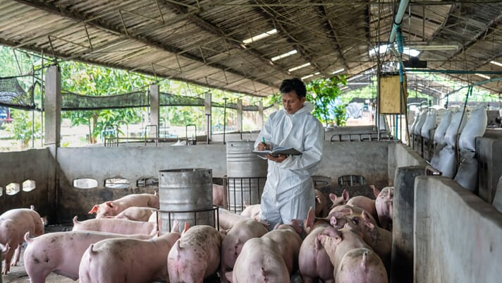 China encourages producers to restock swine herds thumbnail image