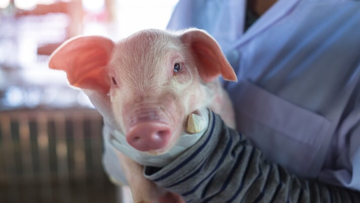 Investor insight into animal health innovation thumbnail image