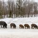 Canadian rockies – looking back on a year of pork-price turmoil thumbnail image