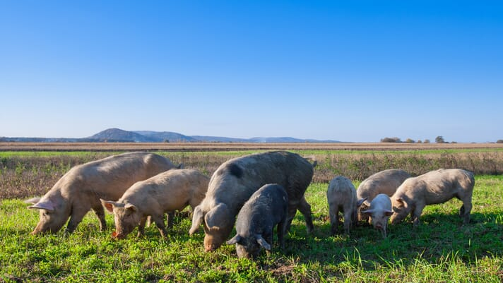 EU offers over €16 million in aid to swine sector thumbnail image