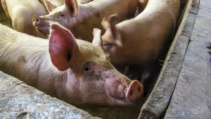 China's pork production slides for seventh quarter due to ASF thumbnail image