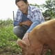 Pork Quality Assurance® Plus revisions now in effect thumbnail image