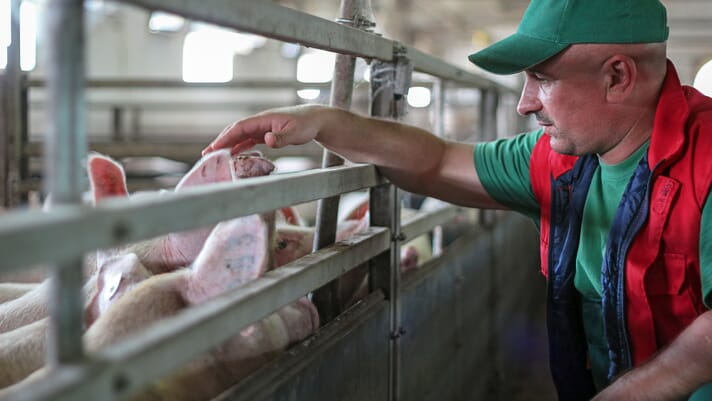 US bacon farmers require action on stalled COVID-19 relief thumbnail image