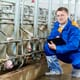 The inner workings of a global swine semen facility thumbnail image
