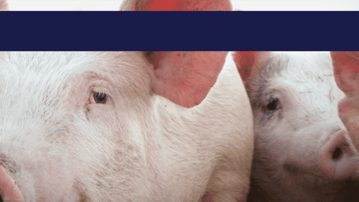 Thermo Fisher Scientific launches new generation PRRSv molecular diagnostic kit in swine thumbnail image