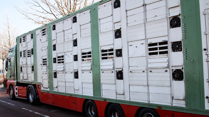 UK Government considers ending live animal exports for slaughter thumbnail image