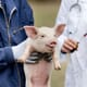 No solution to antimicrobial resistance without addressing farm animal welfare thumbnail image
