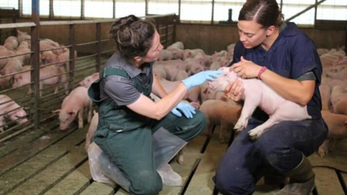 Swine it #64:  Emotional health through hard times in pig production - Kristi Rowles and Daryl Possberg thumbnail image