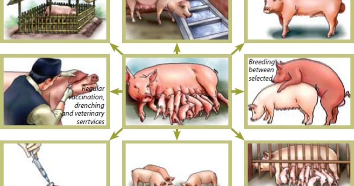 How To Farm Pigs Housing The Pig Site