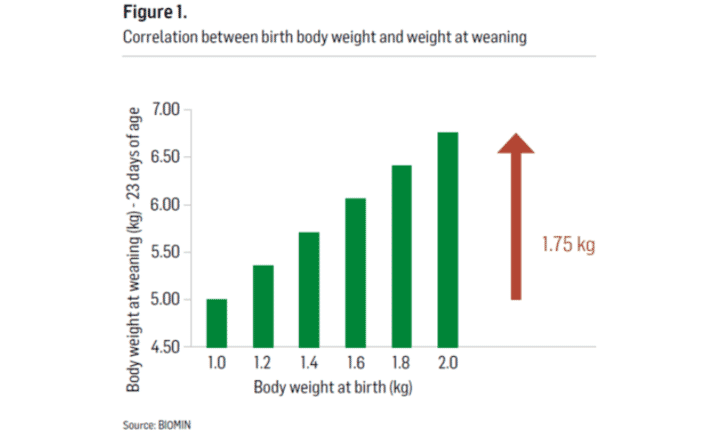 Figure 1. Correlation between birth body weight and weight at weaning