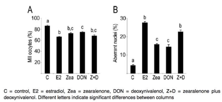 Figure 4. Exposure to oestradiol, ZEN, DON, ZEN+DON, significantly reduced the percentage of oocytes that reached the MII (metaphase II) stage and significantly increased oocyte nuclear abnormalities