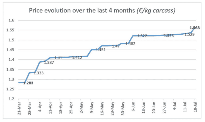 The average carcass weight is decreasing (93.65 kg at the market on 18 July), a decrease of 1.6 kg over the past four weeks, reflecting a constantly decreasing supply