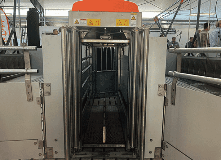 The TriSort entrance gate is open as long as the station is empty. When a pig enters the scale, the gate automatically closes due to the weight change, and the weighing process of three seconds starts. Afterwards, the exit gate opens automatically.