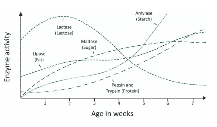 Figure 2. The development of digestive enzyme production in piglets during the first seven weeks.