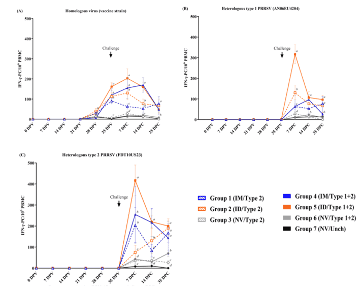 Figure 3. Evaluation of PRRSV-specific IFN- γ -secreting cells (SC) after stimulation with (A) homologous virus (vaccine virus), (B) heterologous PRRSV1 (AN06EU4204) and (C) heterologous HP-PRRSV2 (FDT10US23). Values are expressed as the mean±SEM.