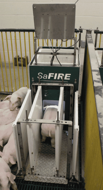 SaFIRE provides researchers with  real-time feed intake and growth data  of small animals for sound genetic,  feed, and pharmaceutical, testing of  small animals.