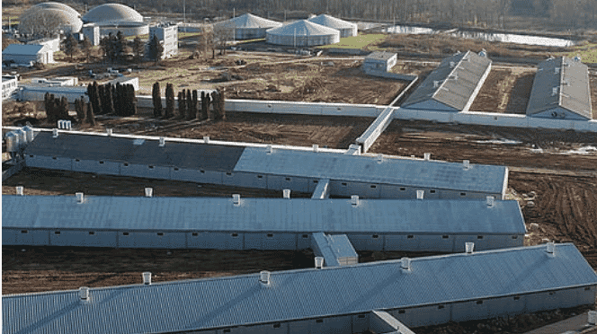 Sow management: The impressive project in Poland houses 6,000 sows.