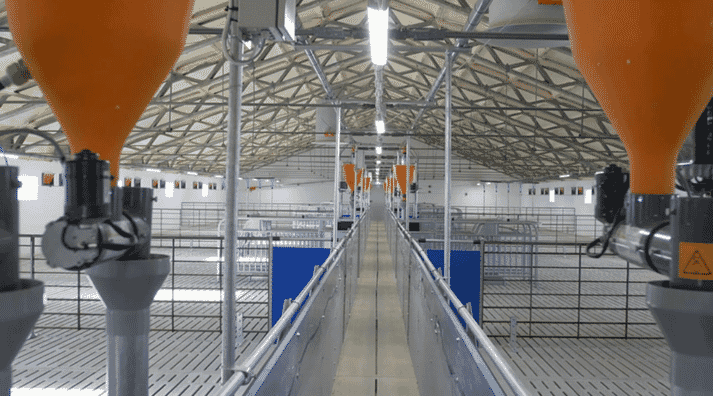 Animal-friendly sow management: group housing of sows with CallBackpro