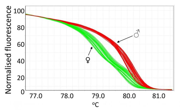 Normalized HRM curve to identify male and female birds from feather crude DNA