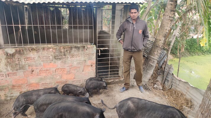 Pig farmer, Lalchand Sardar, overseeing his Ghungroo pigs