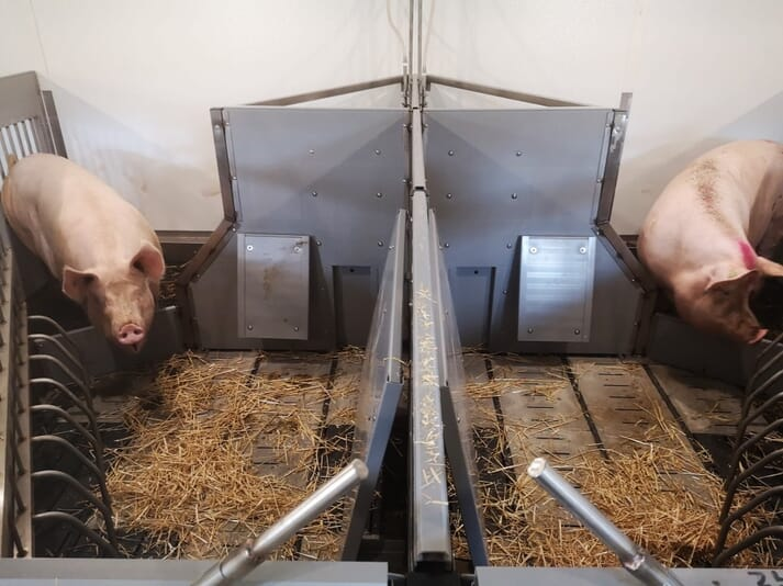 PigSAFE has some of the highest welfare standards for indoor production and it is likely to attract a premium brand