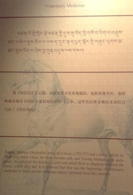 An old transcript tells the story of the origins of veterinary medicine in Tibet