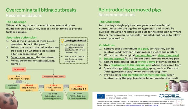 Leaflet on how to overcome tail biting outbreaks