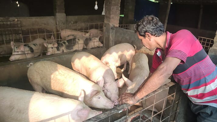 a pig farmer in India tends to his pigs