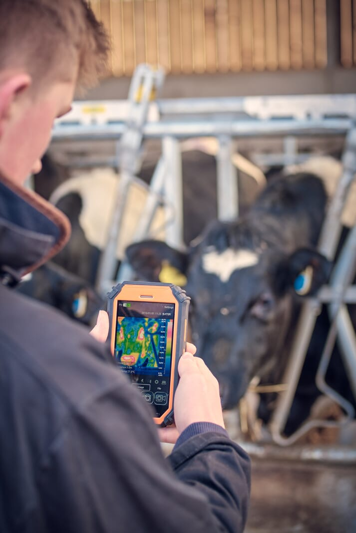 student uses thermal imaging camera in a dairy cow facility