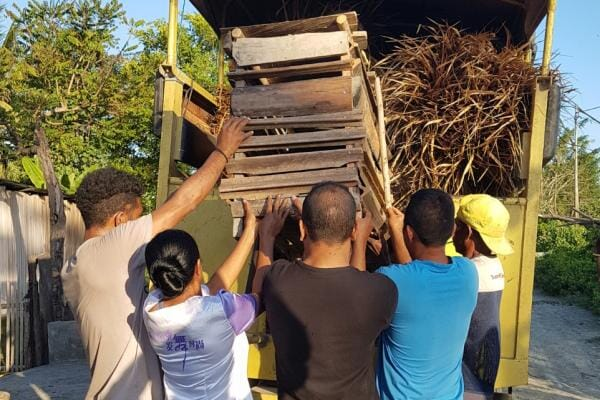 A piglet is loaded into a truck with roofing thatch as part of a ceremony to repair a traditional Timorese sacred house. Pig-ownership is important in Timor-Leste's culture. Photo: Tarni Cooper, University of Queensland.