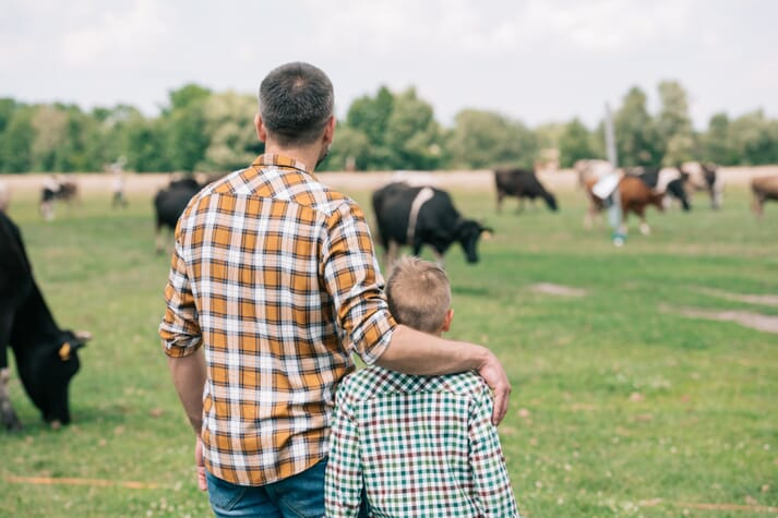 father and son observe cows grazing in a field