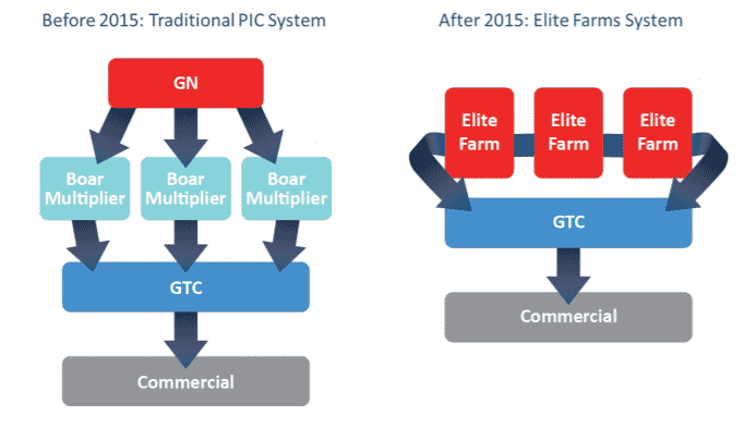 PIC shifts from traditional genetic nucleus system to an Elite Farm system