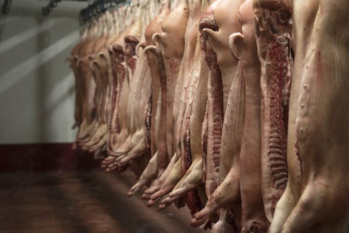 pig carcases hanging in a freezer