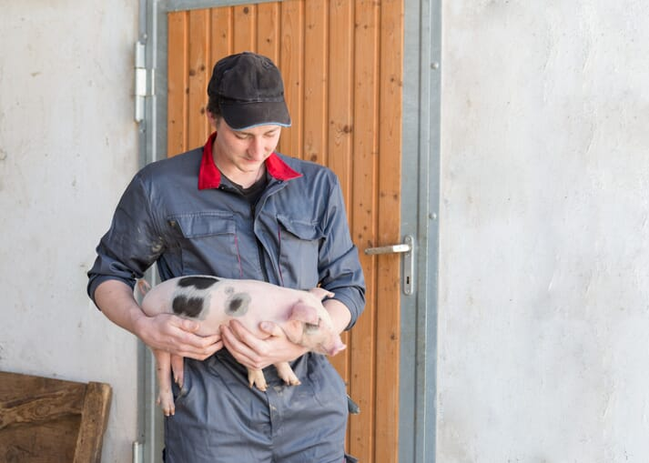 young pig farmer holds a piglet