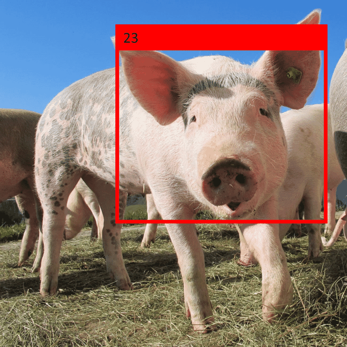 facial recognition machine learning AI pigs