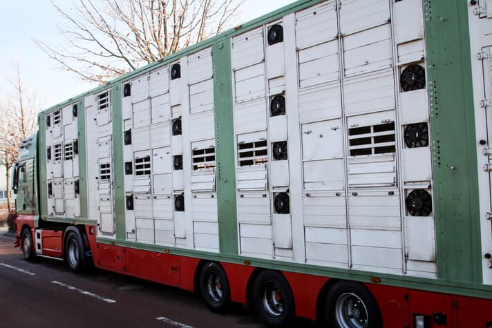 transportation truck carrying livestock