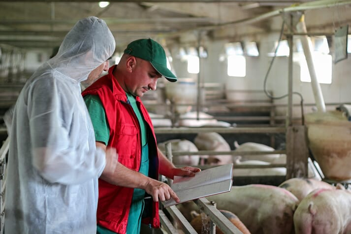 Vet in biosecure boiler suit discusses herd health strategy with pig farmer next to pens of weaner pigs