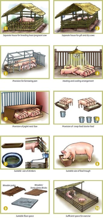 the elements required for good pig housing based upon recommendations by the FAO for pig producers in Vietnam