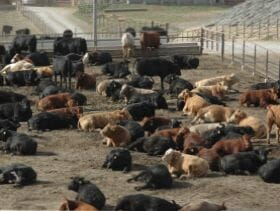 Allendale, Inc  Issues Cold Storage, Cattle on Feed